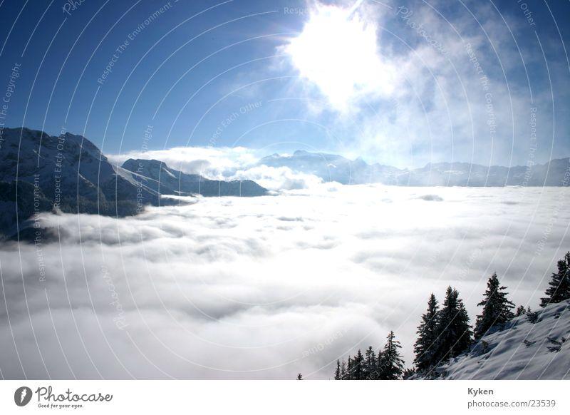 ganz oben weiß Baum Sonne blau Winter Wolken kalt Schnee Berge u. Gebirge Nebel Klettern Tanne Gipfel Berghang