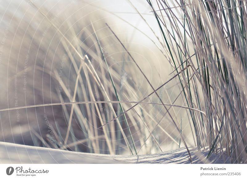 Spiekeroog | Dream a little dream schön Meer Strand Freude Einsamkeit ruhig Erholung Gras Sand träumen Stimmung Wind Zufriedenheit elegant liegen Insel