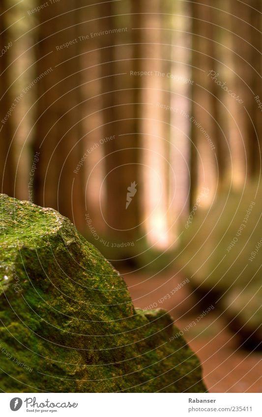 Steinwald Natur grün Baum Pflanze Sonne Wald Umwelt Landschaft Herbst Gefühle Wege & Pfade Stimmung braun Klima Schönes Wetter