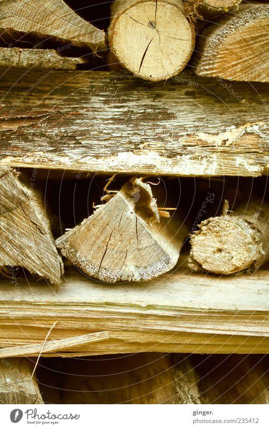 Der nächste Winter kommt bestimmt... Holz braun natürlich rund Baumstamm Lager Stapel Maserung Brennholz Vorrat Brennstoff quer Vorsorge Holzstapel gesplittert