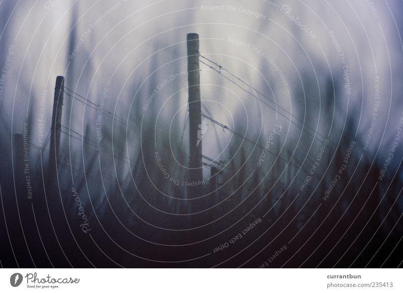 foc si fum Holz Rauch Natur Surrealismus Verfall Vergangenheit Vergänglichkeit Gras Grasland Weinberg blau Farbfoto Gedeckte Farben Menschenleer Abend Dämmerung