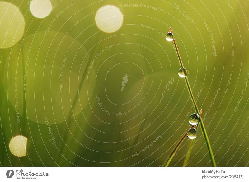 Taubildung Natur Pflanze Urelemente Luft Wasser Wassertropfen Sonne Sonnenaufgang Sonnenuntergang Frühling Gras Blatt Blüte Wildpflanze Garten Park chaotisch