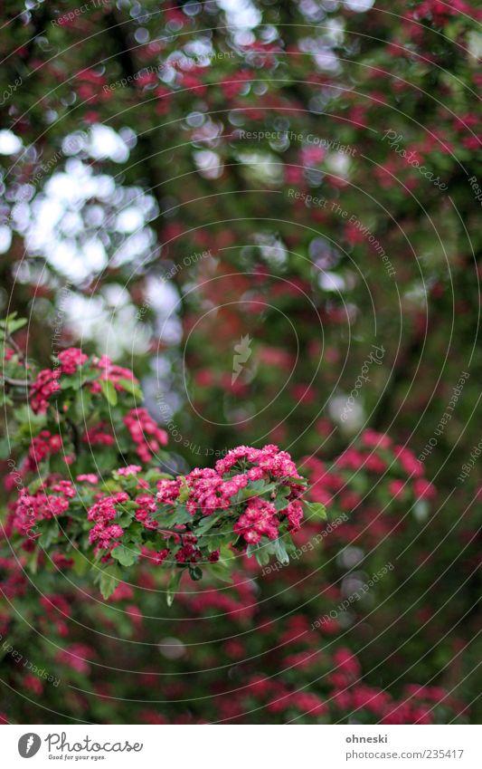 Blüte Natur Pflanze Frühling Baum Blatt Ast grün rosa Glück Frühlingsgefühle Vorfreude trösten Leben Hoffnung Farbfoto mehrfarbig Außenaufnahme