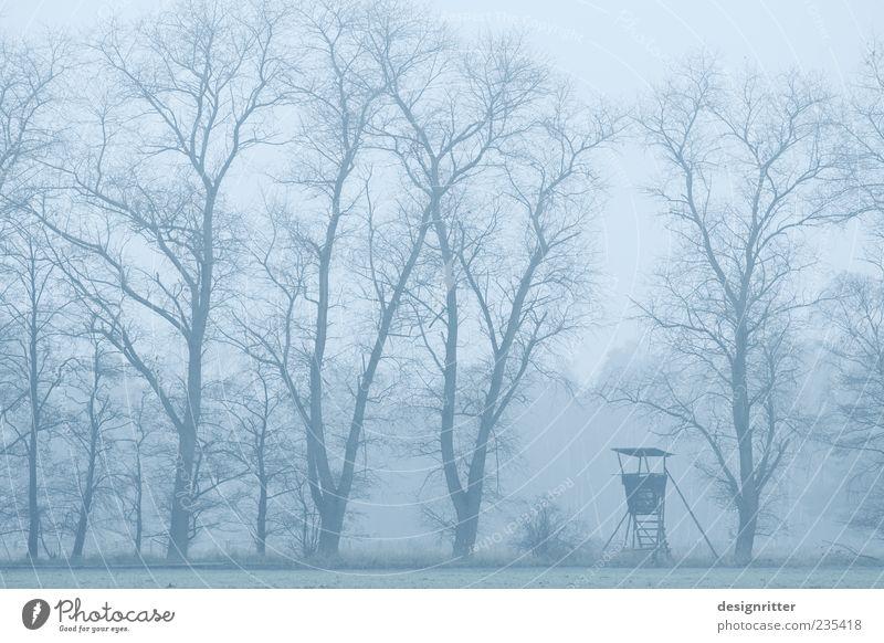 Alleinherrschaft Baum Wald Angst Feld Nebel warten wild gefährlich Turm bedrohlich Macht Beruf Dunst Forstwirtschaft Hochsitz Zweige u. Äste