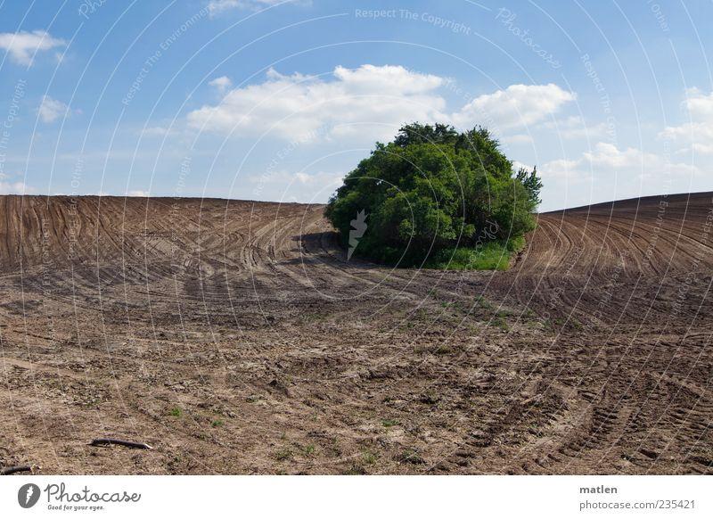 vom Acker Landschaft Erde Himmel Wolken Schönes Wetter Sträucher Feld blau braun grün Spuren ruhig Insel Gedeckte Farben Außenaufnahme Textfreiraum unten