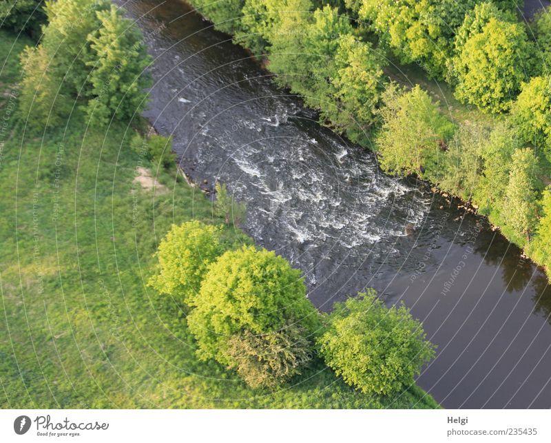 leises Plätschern... Freiheit Umwelt Natur Landschaft Pflanze Wasser Frühling Schönes Wetter Baum Gras Sträucher Flussufer Bewegung Wachstum ästhetisch