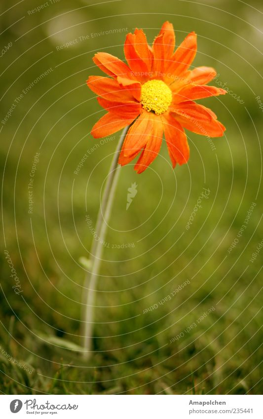 ::11-10:: Natur Pflanze Sommer rot Blume gelb Umwelt Wiese Frühling Gras Blüte Wetter Dekoration & Verzierung authentisch Klima verrückt