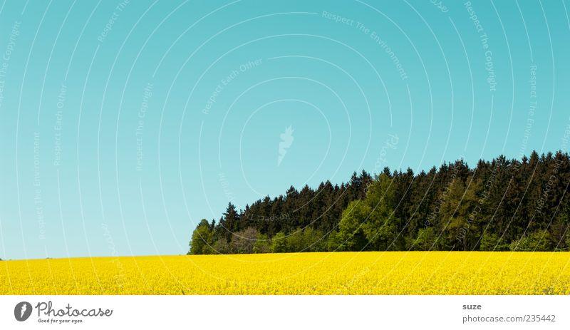 U-Boot im gelben Meer Umwelt Natur Landschaft Himmel Wolkenloser Himmel Sommer Klima Schönes Wetter Nutzpflanze Feld Wald blau grün Raps Rapsfeld reif Blüte