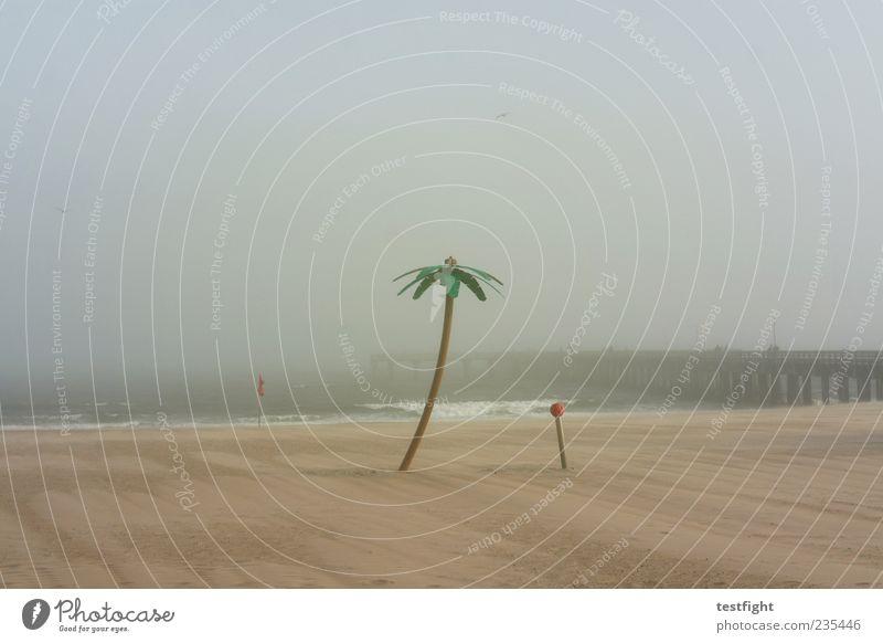 palme Freiheit Strand Natur Sand Himmel Wind Nebel Metall Kunststoff Erholung genießen ruhig Küste Steg Meer Wasser falsch Täuschung Farbfoto Gedeckte Farben