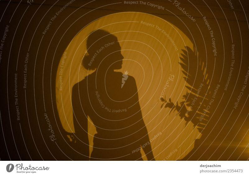Schattenspiel eines Junges Mädchen im Licht und Schatten. Rechts sieht man ein Teil einer Palme. Lampe Raum Lampenlicht feminin Junge Frau Jugendliche 1 Mensch