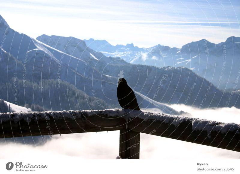 ein Rabe weiß Sonne blau Winter schwarz Wolken kalt Schnee Berge u. Gebirge Vogel Aussicht