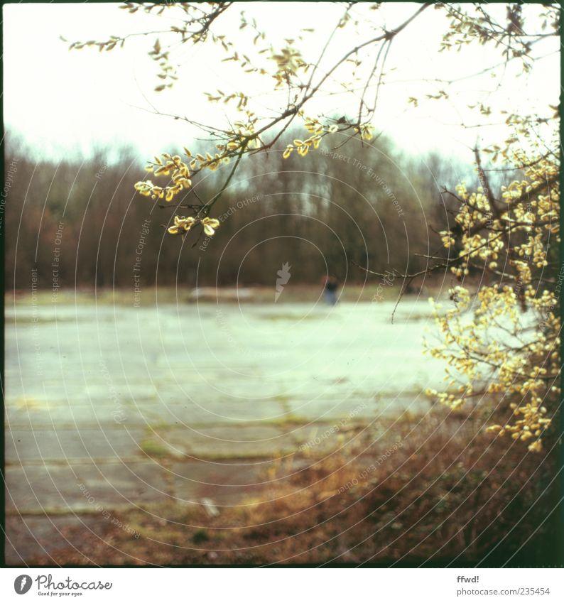 [FFM2011.1] Idylle mit PC-User Mensch Natur Baum Pflanze Blatt Einsamkeit Umwelt Sträucher Wandel & Veränderung Vergänglichkeit Waldlichtung Waldrand