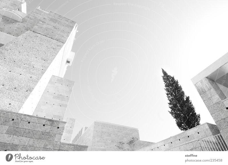 weihnachtsbaum der zukunft Baum Lissabon Portugal Bauwerk Architektur Mauer Wand modern Stadt Zukunft Tanne Beton Stein Museum Sommer Schwarzweißfoto