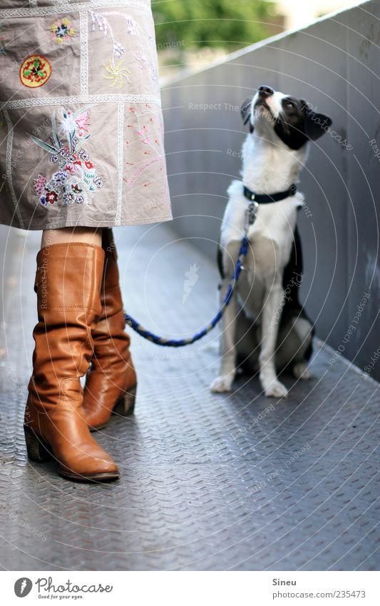 Was issn jetzt mit der Belohnung ??? Mensch Frau Hund Tier Erwachsene Beine warten sitzen stehen Neugier Rock Stiefel Schuhe klug Treue geduldig