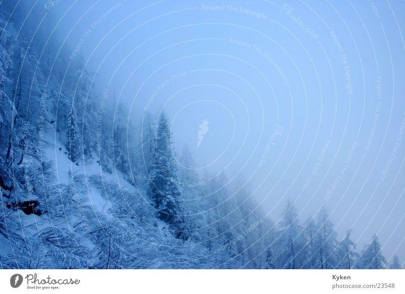 Ausblick weiß Baum blau Winter kalt Schnee Berge u. Gebirge Nebel Tanne Berghang
