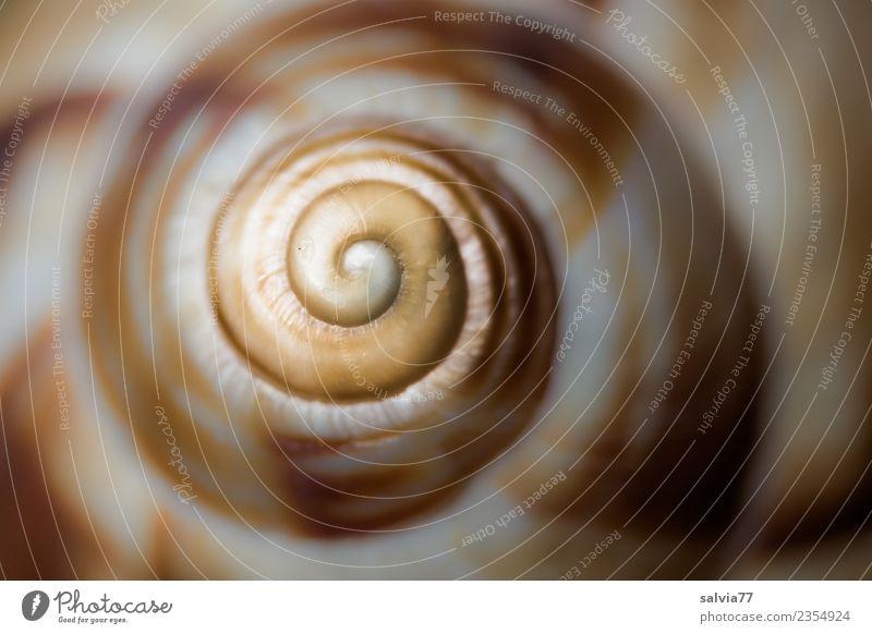 Spirale Natur Tier gelb grau braun Design Beginn rund Unendlichkeit Schnecke Symmetrie Schneckenhaus