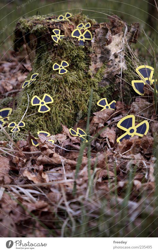 Kontaminiert Natur Baum Pflanze Blatt Umwelt Herbst Gras Blüte Erde Energiewirtschaft Energie gefährlich leuchten Zeichen Warnhinweis Moos