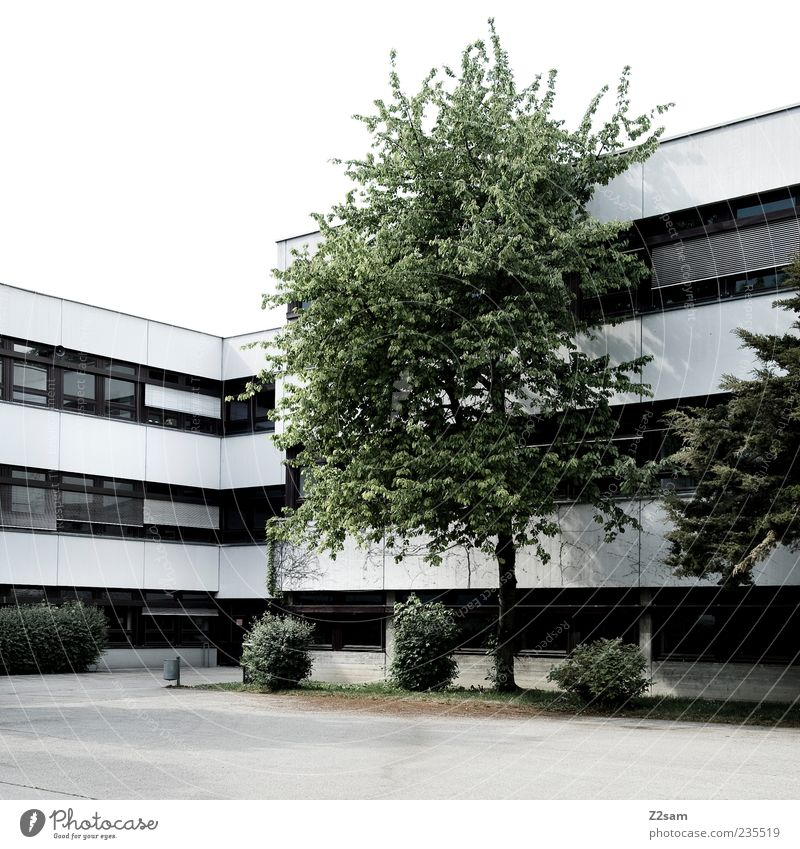 platz zum rumlungern Baum Haus ruhig Umwelt dunkel Fenster kalt Architektur Deutschland Zufriedenheit dreckig Ordnung Beton Platz ästhetisch Schulgebäude