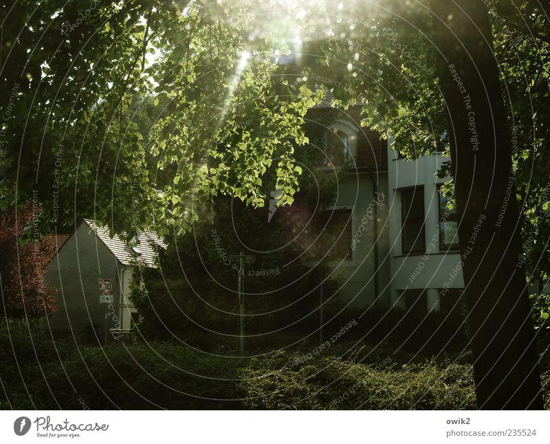 Abend am Stadtpark Umwelt Natur Landschaft Pflanze Klima Wetter Schönes Wetter Baum Blatt Zweige u. Äste Laubbaum Haus Bauwerk Gebäude Hinweisschild Warnschild
