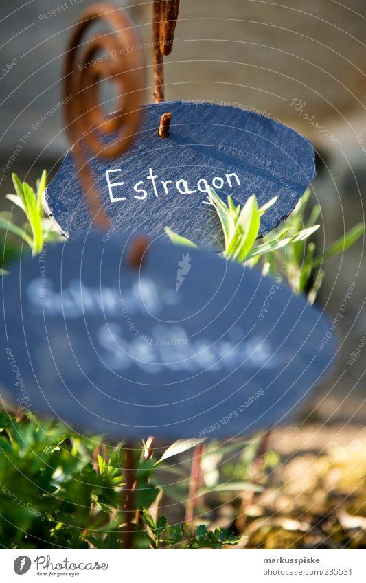kräutergarten - urban-gardening Pflanze Leben Garten Gesundheit Lebensmittel Schilder & Markierungen Ernährung Schriftzeichen Kräuter & Gewürze Leidenschaft