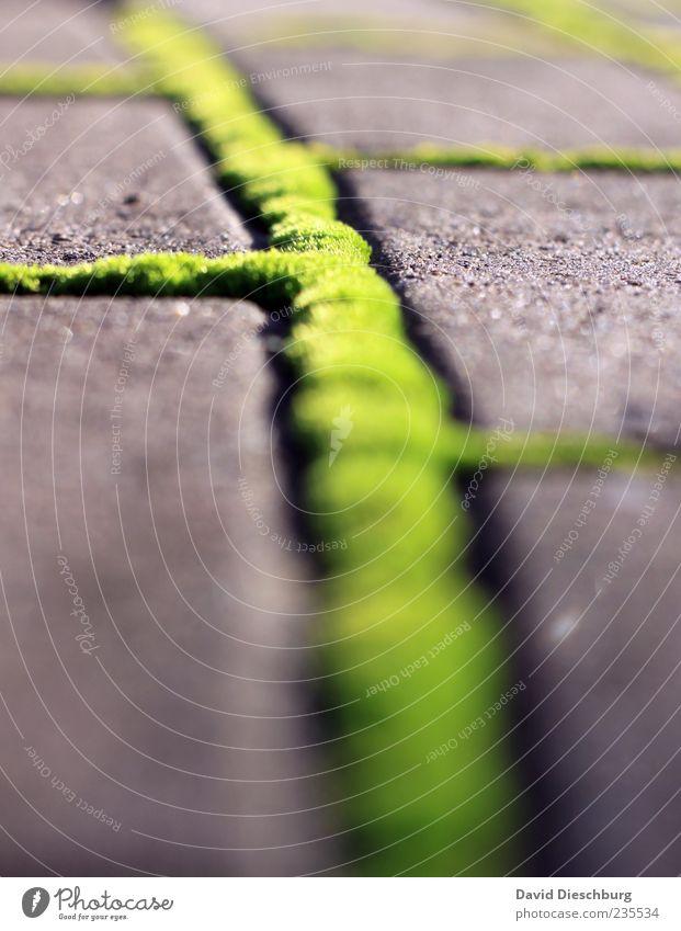 The green mile Natur Pflanze Moos Grünpflanze grau grün Strukturen & Formen Linie Stein Pflastersteine Boden leuchtend grün Außenaufnahme Detailaufnahme