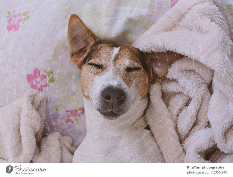 Hund Jugendliche Winter Tierjunges Erwachsene Lifestyle lustig klein Kopf rosa träumen Baby niedlich schlafen Bett Haustier