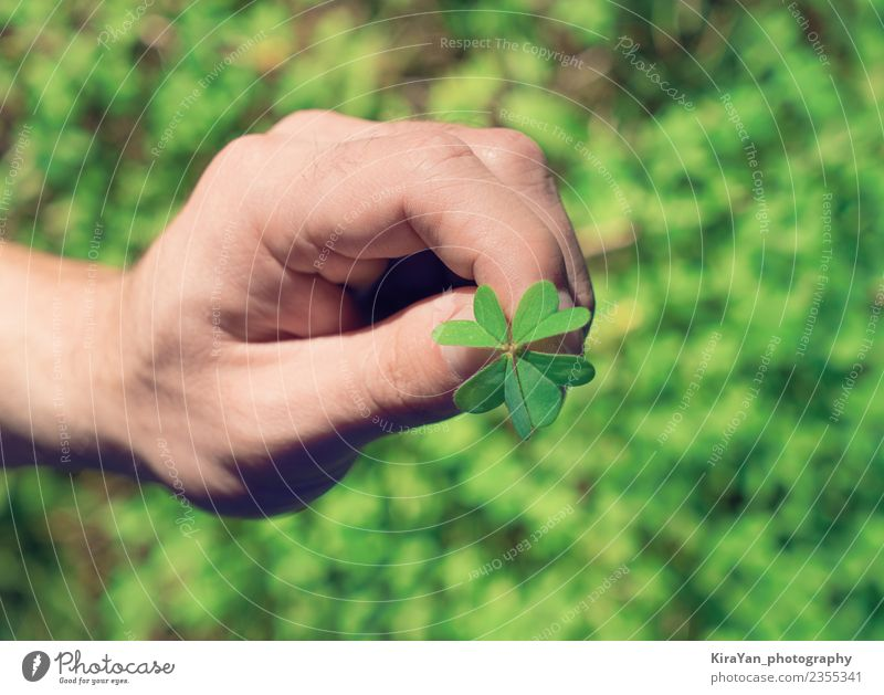 Natur Mann Pflanze Sommer grün Hand Blatt Erwachsene Lifestyle natürlich Gras Glück Feste & Feiern Dekoration & Verzierung Fröhlichkeit Finger