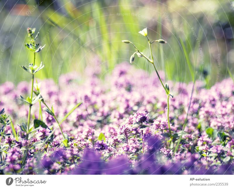 Flowers Natur Pflanze Schönes Wetter Blume Gras Sträucher Blatt Blüte Garten Park Wiese Duft schön blau violett Frühlingsgefühle ästhetisch Leben Lebensfreude