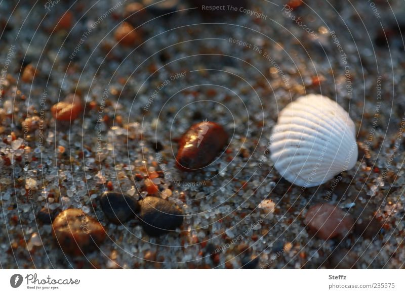 Strandgut im Abendlicht Ostsee Muschel Ostseestrand Steine Wohlgefühl Erholung Abendstimmung Ruhe Muschelschale Abendruhe Dämmerung nah Lichtstimmung