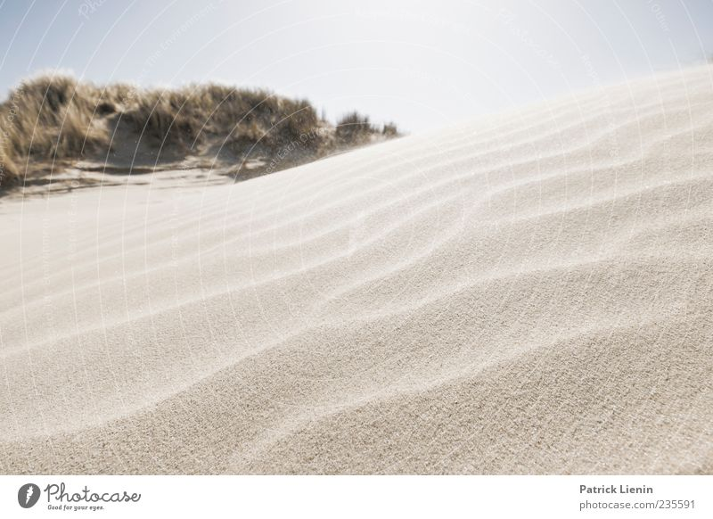 Spiekeroog | Soul Meets Body Himmel Natur blau schön Pflanze Strand ruhig Umwelt Landschaft Sand Küste hell Wetter Wind Urelemente Hügel