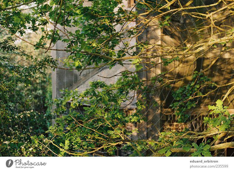 I'll Gain Eternal Life Umwelt Natur Frühling Schönes Wetter Baum Mauer Wand Fassade Farbfoto Außenaufnahme Menschenleer Morgen Licht Sonnenlicht