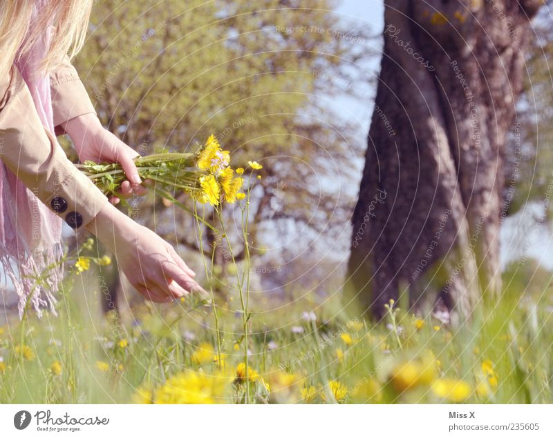 Blumenstrauß Wohlgefühl Zufriedenheit Erholung ruhig Arme Hand Natur Pflanze Frühling Sommer Schönes Wetter Baum Gras Blatt Blüte Park Wiese Blühend Duft