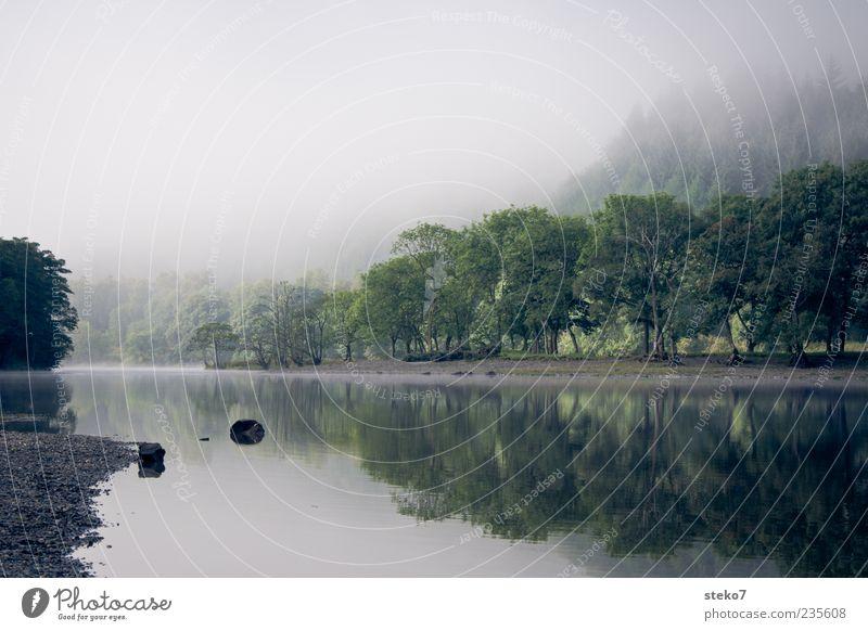 früh Baum ruhig Wald Erholung Nebel natürlich Fluss Flussufer Dunst Wasseroberfläche Schottland Wasserspiegelung