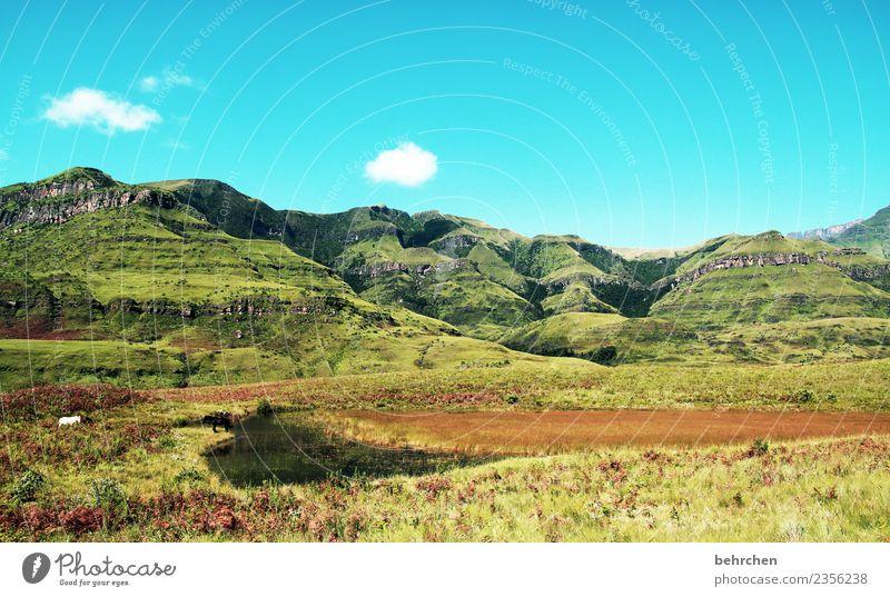 die großartigen drakensberge Ferien & Urlaub & Reisen Tourismus Ausflug Abenteuer Ferne Freiheit Natur Landschaft Himmel Wolken Baum Sträucher Berge u. Gebirge