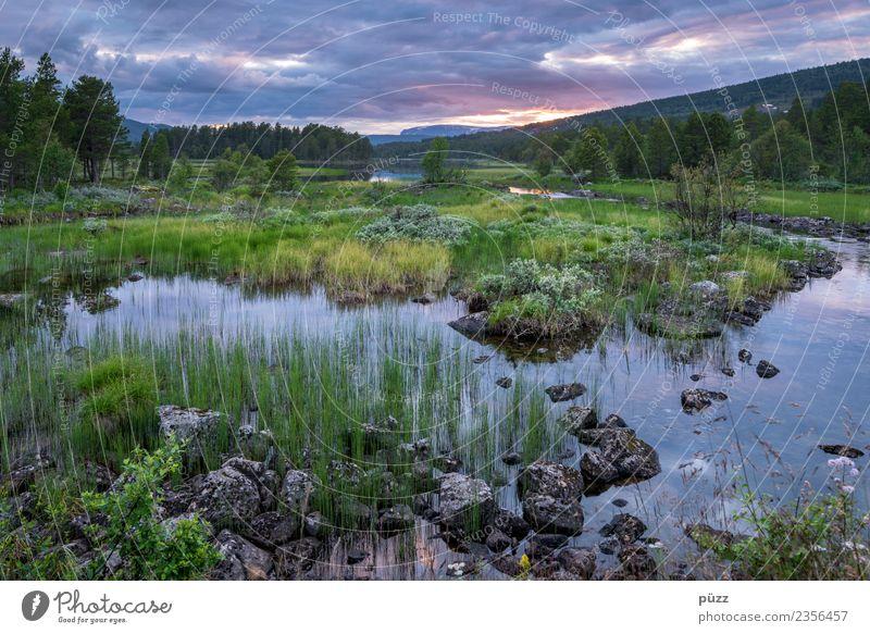 Abenddämmerung Umwelt Natur Landschaft Wasser Himmel Wolken Sommer Baum Gras Sträucher Feld Wald Flussufer See Norwegen wandern blau grün Gefühle Zufriedenheit