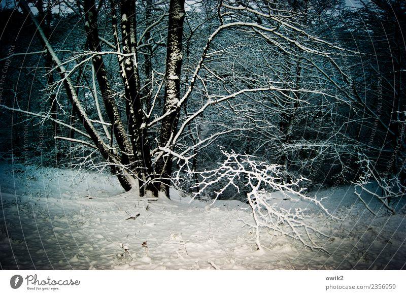 Versunken Natur Pflanze Landschaft Baum ruhig Winter Wald Umwelt kalt Schnee leuchten Eis Idylle Schönes Wetter Frost geduldig