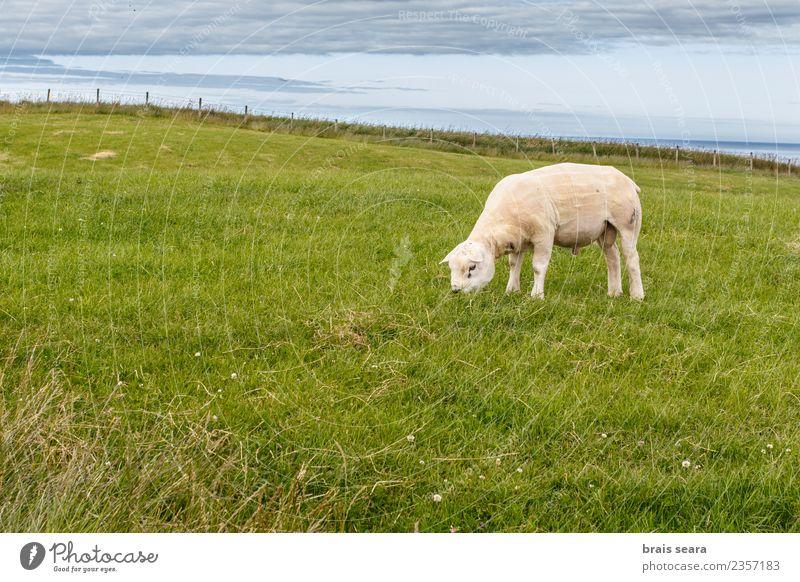 Himmel Natur Sommer grün weiß Tier Essen Umwelt Frühling natürlich Wiese Gras Lebensmittel Erde Zufriedenheit Feld