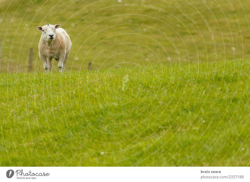 Natur Ferien & Urlaub & Reisen Mann Sommer grün Landschaft weiß Erholung Haus Tier Berge u. Gebirge Erwachsene Essen Umwelt Frühling natürlich
