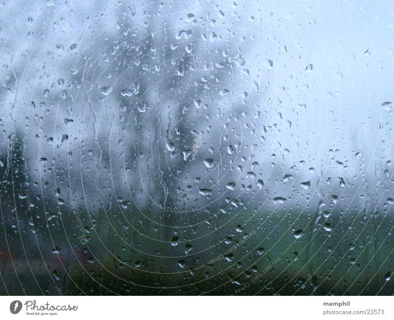 It's raining ... Baum Unscharf Regen Regentropfen Scheibe Fenster Fensterglas Fensterscheibe regnerisch x