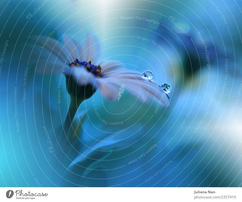 Sanftes romantisches künstlerisches Bild. Weicher pastellfarbener Hintergrund verschwimmt. Natur Pflanze Urelemente Wasser Wassertropfen Sommer Blume Blatt