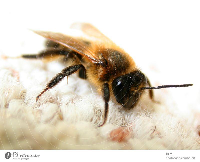 flotte biene Biene Makroaufnahme