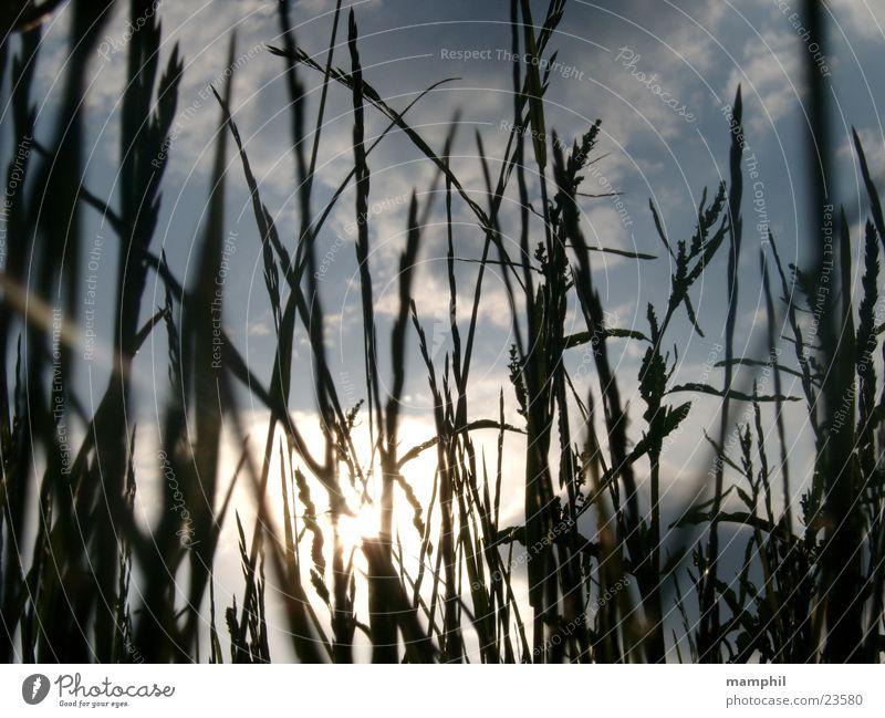 Durchs Gras geschaut (II) Feld Wegrand Wolken Gegenlicht Sonne Himmel x