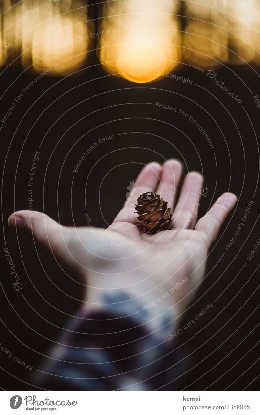 Die kleinen Dinge Lifestyle harmonisch Wohlgefühl Zufriedenheit Sinnesorgane Erholung ruhig Freizeit & Hobby Ausflug Abenteuer Freiheit Mensch Hand Finger
