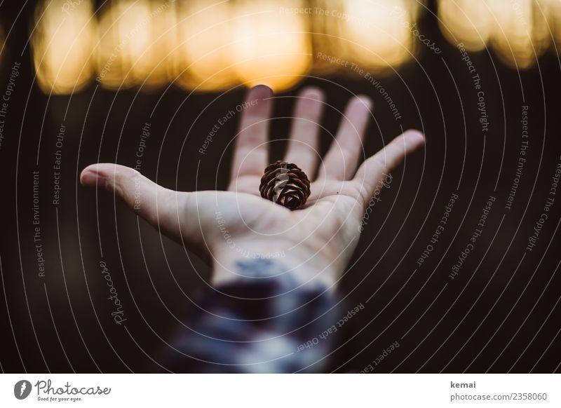 Kleine Schätze Lifestyle harmonisch Wohlgefühl Zufriedenheit Sinnesorgane Erholung ruhig Freizeit & Hobby Ausflug Abenteuer Freiheit Mensch Hand Finger
