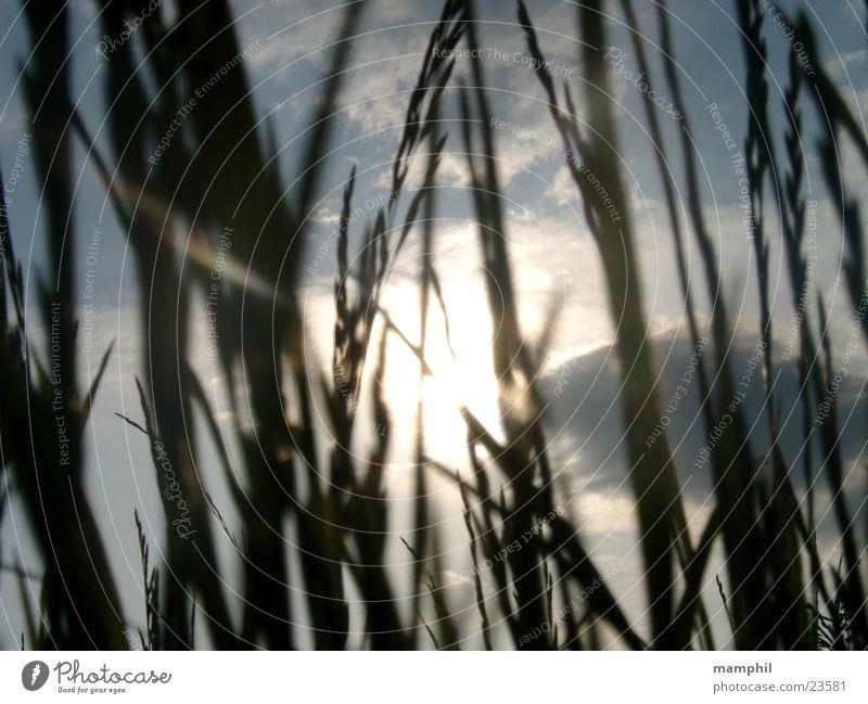 Durchs Gras geschaut (I) Feld Wegrand Wolken Gegenlicht Sonne Himmel x