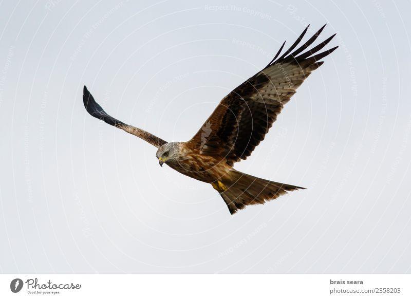 Himmel Natur blau Sommer schön Farbe grün rot Tier schwarz natürlich Freiheit braun Vogel fliegen wild