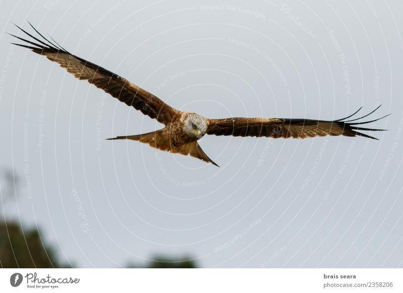 Himmel Natur blau Sommer schön Farbe grün rot Tier schwarz natürlich Bewegung Freiheit braun Vogel fliegen