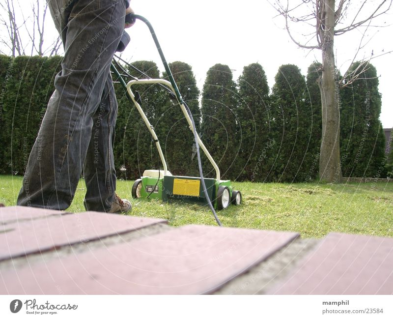 Vertikutieren Gras lüften Baum Hecke Mauer Steinmauer Mann Rasen vertikutieren Vertikutierer x