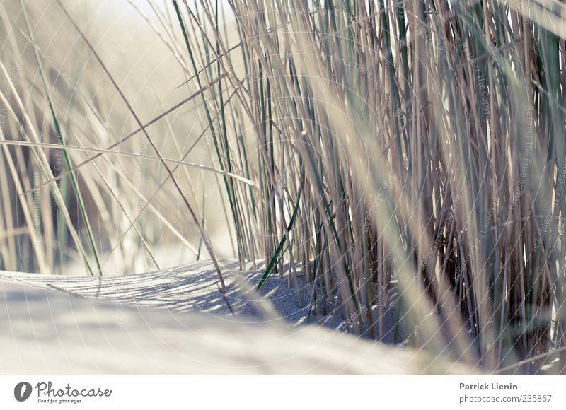 Spiekeroog | Ich werde dich lieben Strand Umwelt Natur Pflanze Sand Gras Küste Nordsee hell Düne Stranddüne Farbfoto Außenaufnahme Nahaufnahme Detailaufnahme