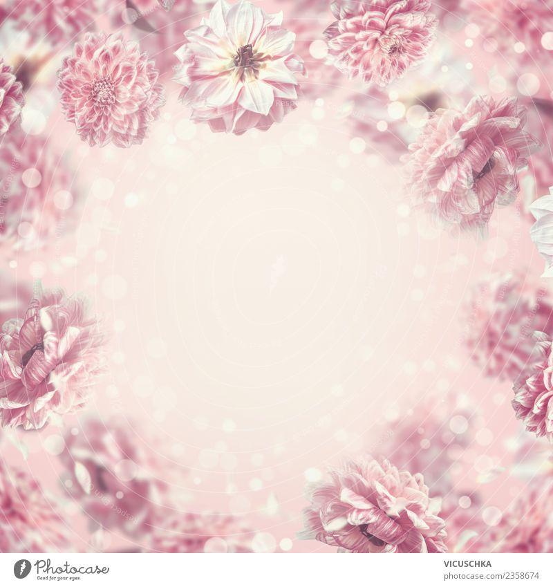Pastell rosa Blumen Hintergrund Rahmen Stil Design Sommer Feste & Feiern Valentinstag Muttertag Hochzeit Geburtstag Pflanze Rose Blüte Dekoration & Verzierung
